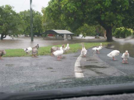 Gooseponds next to Caltex Garage.