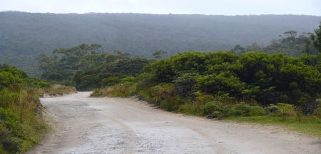 The track to Cockle Creek.