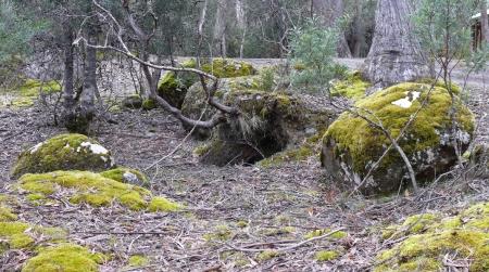 Moss n Lichen.