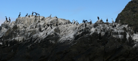Southern Ocean Cormorants atop their Guano.