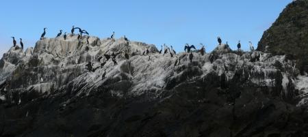 Southern Ocean Cormorants atop their Guano.