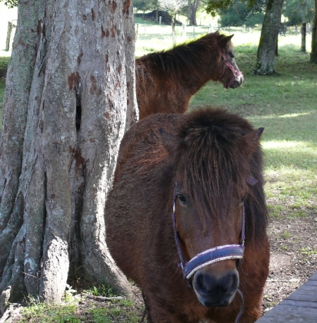 A couple of equine visitors.