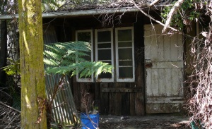 This house was almost completely overgrown by the rainforest but was still habited by an old couple and their middle aged son.