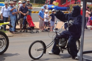 Gorilla on small motorcycle in the Christmas parade.