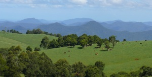 Wild mountain ranges in the Oxley Wild Rivers National Park from the Dorrigo Hillside.