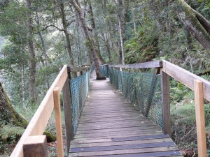 One of the timber walkways on the track to Dangar Falls.