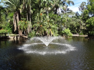 Fountain with the Brisbane City Botanical Gardens.
