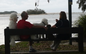 These people have a pair of cute Poodles cut in the traditional manner.