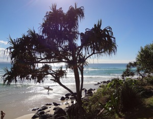 Greenmount Beach through a lovely Pandanus Palm.