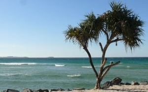 Pandanus at Kingscliff Beach