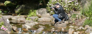 Photographer intent on a Bearded Dragon at the Japanese gardens