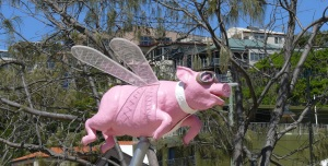 "We have all heard the expression...""when pigs can fly..."""
