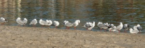 Currumbin estuary is a meeting place for all types to flock to.