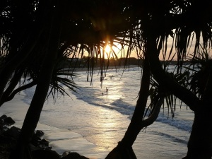 Yet another sunset through the Pandanus at Noosa Beach.