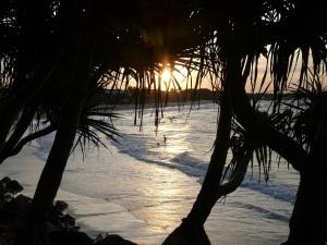Yet another sunset through the Pandanus at Noosa Beach.