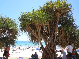 More Pandanus framed views of Noosa Beach
