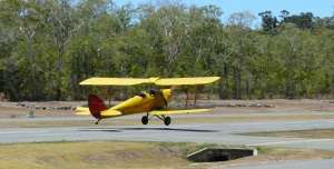 Whitsunday Tiger Moth