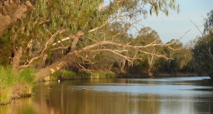The lazy Barwon River at Collarenebri