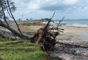 A victim of the last cyclone and tidal surges at Half Tide Beach. In the background is the breakwall made of granite. The breakwall was constructed to join up with a small island just offshore.