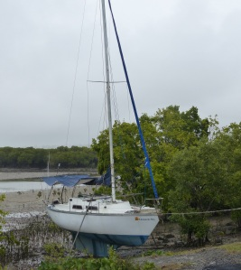 Boats moor in what the owners believe are the safety of the mangroves.