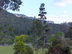 Sandstone cliffs in the Numinbah Valley.