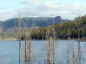 Dead timber on Lake Advancetown with a volcanic plug jumpup in the background.