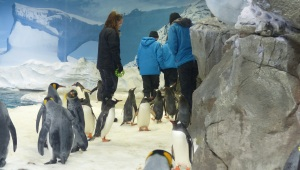 For an extra fee guests can get kitted up with cold weather gear and walk into the penguin enclosure for an up close and personal encounter. Hmmm! Perhaps on my next visit.