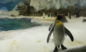 The Emperor Penguins     are as curious about us as we are about them.