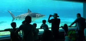 Sharks swim by close to the glass where hasps of awe ripple through the crowds.