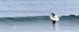 Right hand reef break at Oak Park near the entrance to Port Hacking.