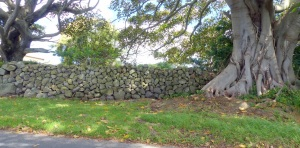 The hills surrounding Kiama are cfris crossed with these fine examples of dry stone walls. Although some have been dismantled the remaining walls can be seen nfor several kilometres from the highway, the motorway and the surrounding hills. In a word- awesome!