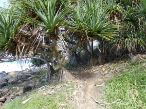 Burleigh Heads National Park walking track was closed due to a bushfire late last year followed by a landslide after heavy rain. Surfer made their own muddy path to a launch site on the rock headland.
