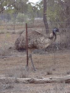 080215 emu
