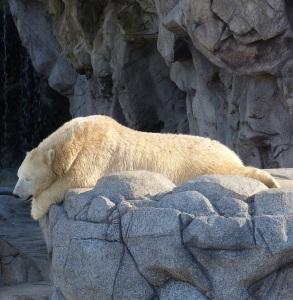 020315 bear