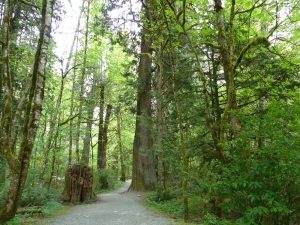 A walk in the forest at Goldstream Provincial Park.