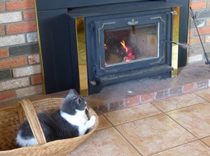 Cat enjoying fire.