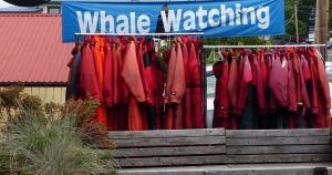 Whale watching wet gear at Cowichan Bay