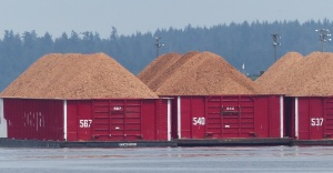 From a distance these woodpulp barges look like houses.