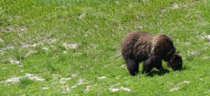 We saw the bear again on our return trip.