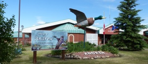 Worlds biggest Mallard Duck at its home in Andrew Alberta