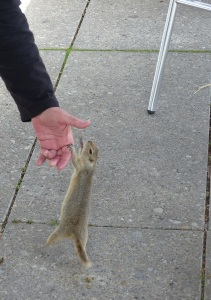 "The sign said ""Do not feed the wildlife"". I pretended to offer food and he chomped on my fingers."