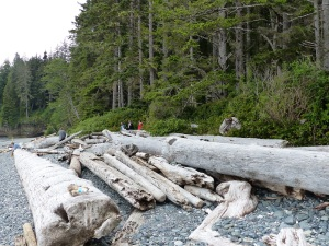 Logs on China Beach west coast Vancouver Island.