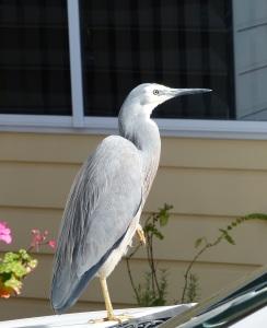 200715 heron1
