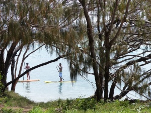 Stand up paddle boarders seen through the Casuarina trees.