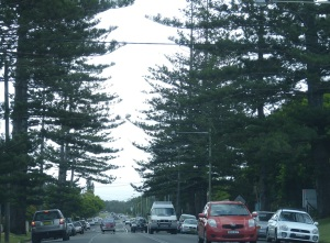 Norfolk Island Pines. Like many beaches throughout Australia these pines are an iconic fixture.