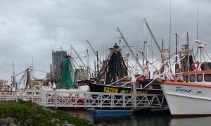The Gold Coast Fish Co-Op is a collection of fishing trawlers and crew who sell directly to the public from their on board refrigerators and freezers.