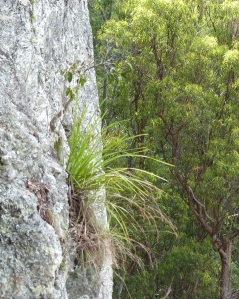 Life on the edge is precarious. This plant seem to be thriving on little more than a crack in the escarpment walls.