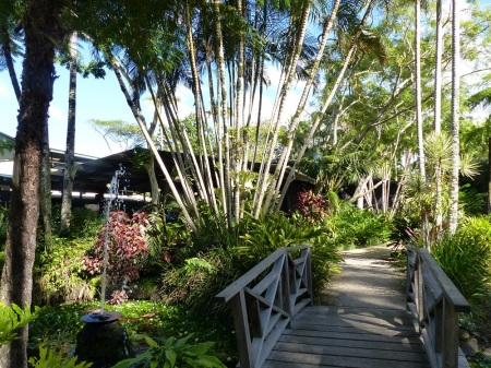 Part of the tropical gardens at the Buderim Ginger Factory at Yandina.